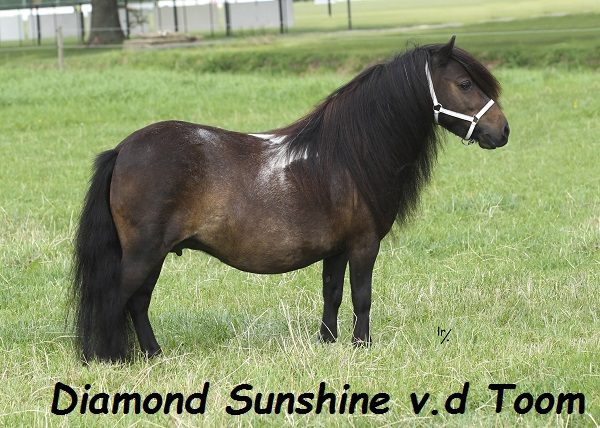 Diamond Sunshine vd Toom