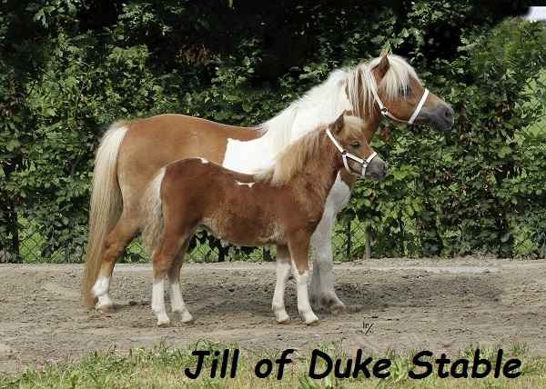 Jill of Duke Stable
