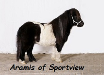Aramis of Sportview1