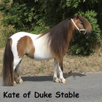 Kate of Duke Stable
